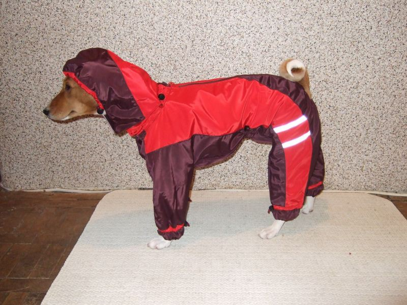 Дождевик для собаки своими руками